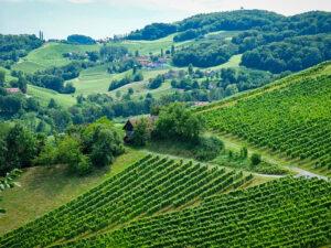 Genussreisen - Weinberge in der Steiermark