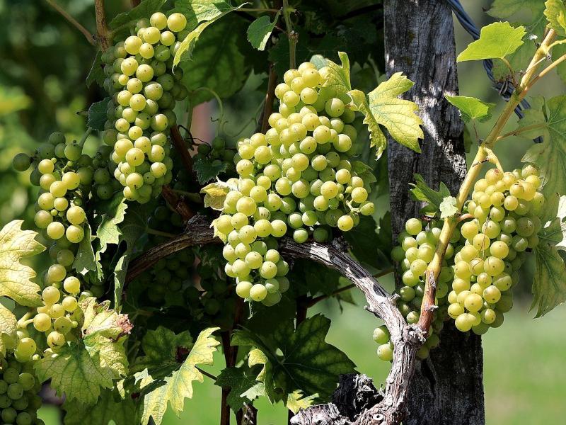 Urlaub im Weinland Slowenien - Beitragsbild